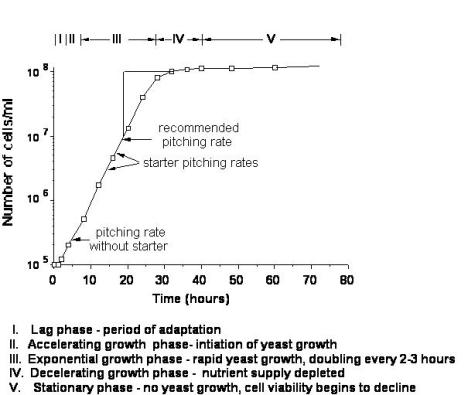 График роста при низкой концентрации